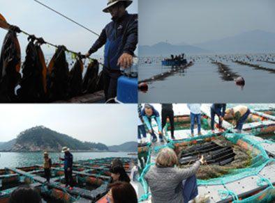 Partenariat franco-coréen : la Station Biologique de Roscoff et le comté de Wando, ensemble pour valoriser les algues